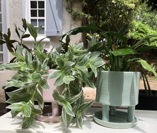 Tripod Green & Pink Glazed Pots styled with Tradescantia and Peace Lilly